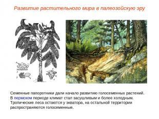 Семенные папоротники дали начало развитию голосеменных растений. В пермском пери