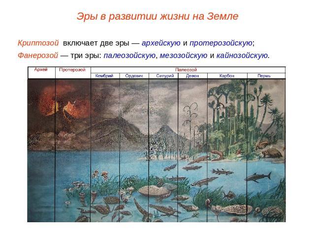 Криптозой включает две эры — архейскую и протерозойскую; Фанерозой — три эры: палеозойскую, мезозойскую и кайнозойскую. Эры в развитии жизни на Земле