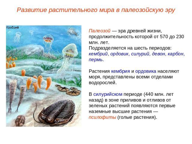 Палеозой — эра древней жизни, продолжительность которой от 570 до 230 млн. лет. Подразделяется на шесть периодов: кембрий, ордовик, силурий, девон, карбон, пермь. Растения кембрия и ордовика населяют моря, представлены всеми отделами водорослей. В с…
