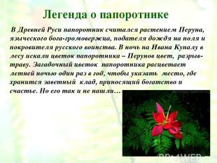 Легенда о папоротнике В Древней Руси папоротник считался растением Перуна, языче