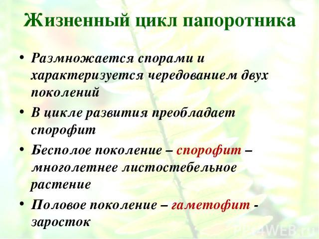 Жизненный цикл папоротника Размножается спорами и характеризуется чередованием двух поколений В цикле развития преобладает спорофит Бесполое поколение – спорофит – многолетнее листостебельное растение Половое поколение – гаметофит - заросток