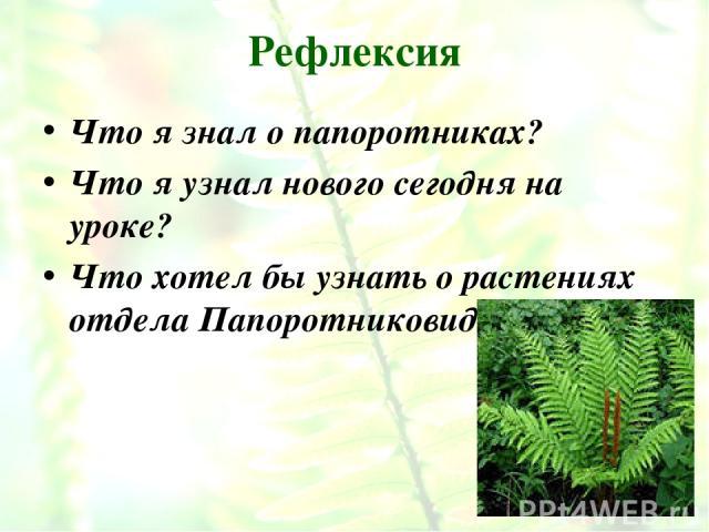 Рефлексия Что я знал о папоротниках? Что я узнал нового сегодня на уроке? Что хотел бы узнать о растениях отдела Папоротниковидные?