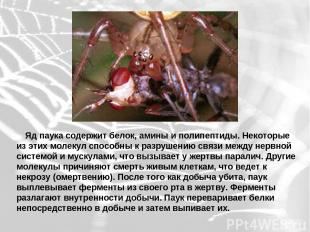 Яд паука содержит белок, амины и полипептиды. Некоторые из этих молекул спос