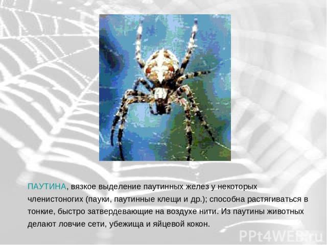 ПАУТИНА, вязкое выделение паутинных желез у некоторых членистоногих (пауки, паутинные клещи и др.); способна растягиваться в тонкие, быстро затвердевающие на воздухе нити. Из паутины животных делают ловчие сети, убежища и яйцевой кокон.