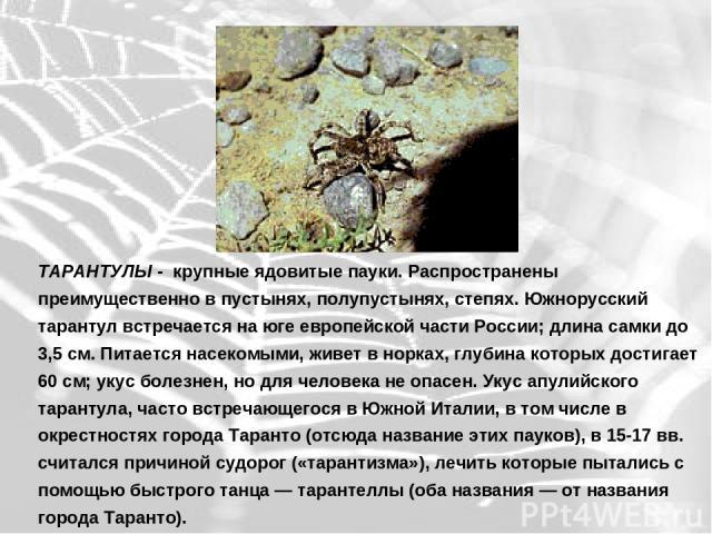 ТАРАНТУЛЫ - крупные ядовитые пауки. Распространены преимущественно в пустынях, полупустынях, степях. Южнорусский тарантул встречается на юге европейской части России; длина самки до 3,5 см. Питается насекомыми, живет в норках, глубина которых достиг…