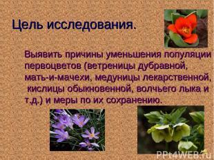 Цель исследования. Выявить причины уменьшения популяции первоцветов (ветреницы д