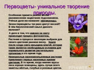 Первоцветы- уникальное творение природы. Особенная примета ранней весны- ранневе