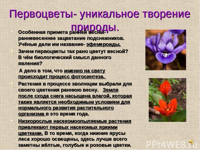 Первоцветы- уникальное творение природы. Особенная примета ранней весны- ранневесеннее зацветание подснежников. Учёные дали им название- эфемероиды. Зачем первоцветы так рано цветут весной? В чём биологический смысл данного явления? А дело в том, чт…