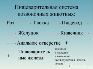 Пищеварительная система позвоночных животных: Рот Глотка Пищевод Желудок Кишечни