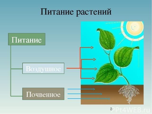 Питание растений Питание Воздушное Почвенное Питание Воздушное Почвенное