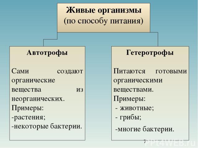 Живые организмы (по способу питания) Автотрофы Сами создают органические вещества из неорганических. Примеры: -растения; -некоторые бактерии. Гетеротрофы Питаются готовыми органическими веществами. Примеры: - животные; - грибы; -многие бактерии.
