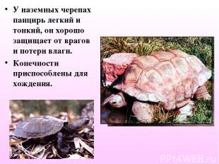 У наземных черепах панцирь легкий и тонкий, он хорошо защищает от врагов и потер