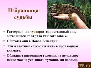 Избранница судьбы Гаттерия (или туатара)- единственный вид, оставшийся от отряда