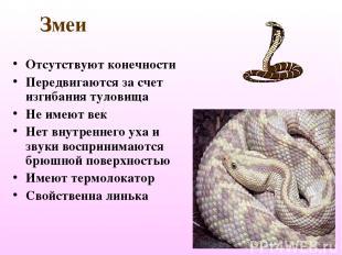 Змеи Отсутствуют конечности Передвигаются за счет изгибания туловища Не имеют ве