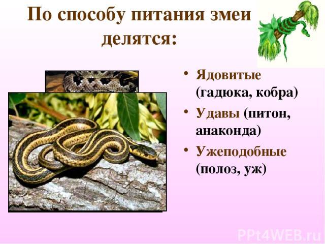 По способу питания змеи делятся: Ядовитые (гадюка, кобра) Удавы (питон, анаконда) Ужеподобные (полоз, уж)