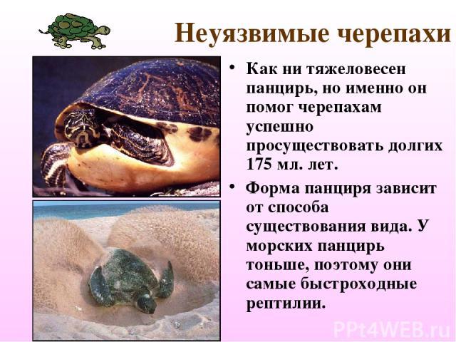 Неуязвимые черепахи Как ни тяжеловесен панцирь, но именно он помог черепахам успешно просуществовать долгих 175 мл. лет. Форма панциря зависит от способа существования вида. У морских панцирь тоньше, поэтому они самые быстроходные рептилии.