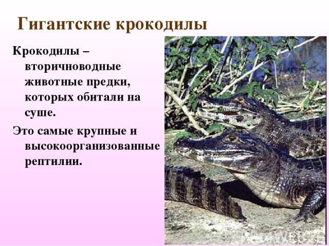Гигантские крокодилы Крокодилы – вторичноводные животные предки, которых обитали на суше. Это самые крупные и высокоорганизованные рептилии.