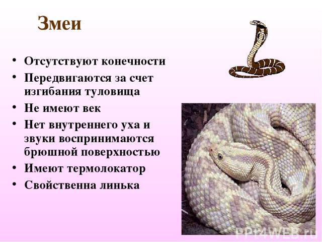 Змеи Отсутствуют конечности Передвигаются за счет изгибания туловища Не имеют век Нет внутреннего уха и звуки воспринимаются брюшной поверхностью Имеют термолокатор Свойственна линька
