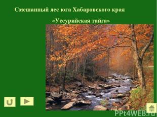 Смешанный лес юга Хабаровского края «Уссурийская тайга»