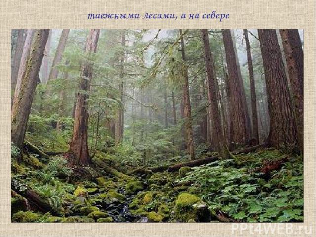 таежными лесами, а на севере