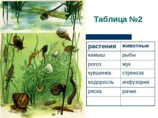 Таблица №2 растения животные камыш рыбы рогоз жук кувшинка стрекоза водоросль ин
