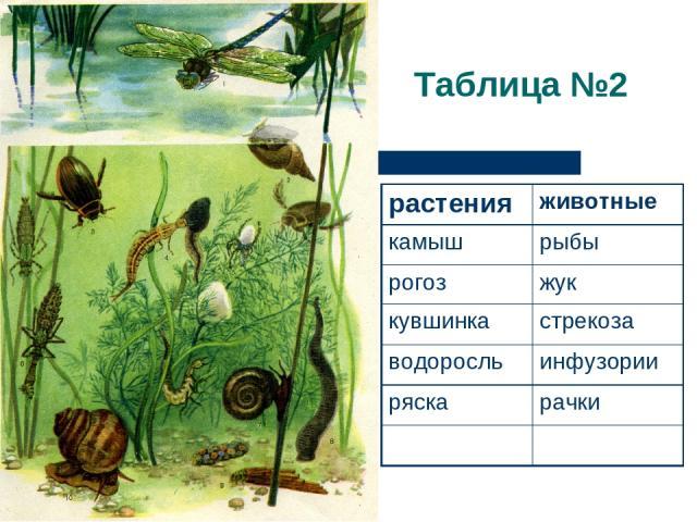 Таблица №2 растения животные камыш рыбы рогоз жук кувшинка стрекоза водоросль инфузории ряска рачки