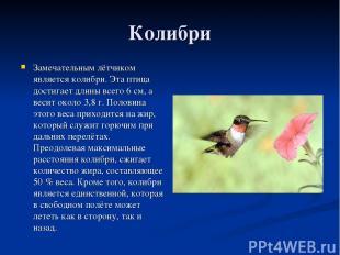 Колибри Замечательным лётчиком является колибри. Эта птица достигает длины всего