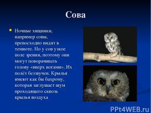 Сова Ночные хищники, например совы, превосходно видят в темноте. Но у сов узкое