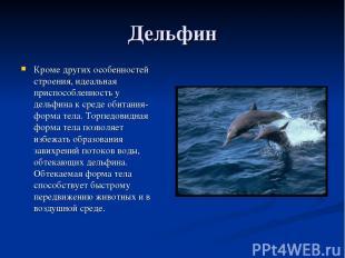 Дельфин Кроме других особенностей строения, идеальная приспособленность у дельфи