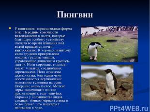 Пингвин У пингвинов торпедовидная форма тела. Передние конечности видоизменены в
