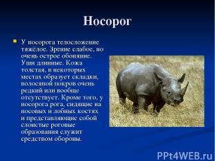 Носорог У носорога телосложение тяжёлое. Зрение слабое, но очень острое обоняние