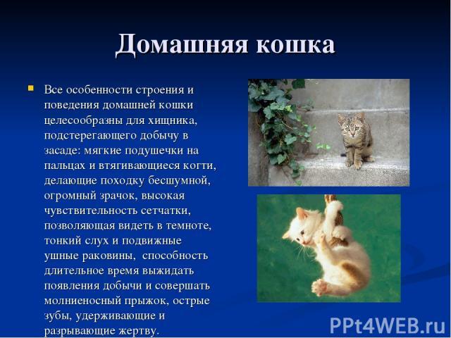 Домашняя кошка Все особенности строения и поведения домашней кошки целесообразны для хищника, подстерегающего добычу в засаде: мягкие подушечки на пальцах и втягивающиеся когти, делающие походку бесшумной, огромный зрачок, высокая чувствительность с…