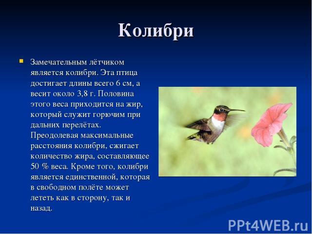 Колибри Замечательным лётчиком является колибри. Эта птица достигает длины всего 6 см, а весит около 3,8 г. Половина этого веса приходится на жир, который служит горючим при дальних перелётах. Преодолевая максимальные расстояния колибри, сжигает кол…