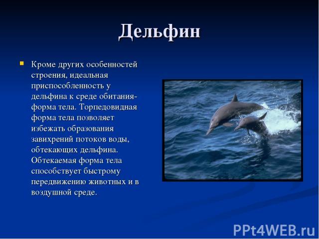Дельфин Кроме других особенностей строения, идеальная приспособленность у дельфина к среде обитания- форма тела. Торпедовидная форма тела позволяет избежать образования завихрений потоков воды, обтекающих дельфина. Обтекаемая форма тела способствует…