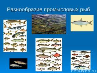 Разнообразие промысловых рыб