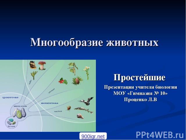 Многообразие животных Простейшие Презентация учителя биологии МОУ «Гимназия № 10» Проценко Л.В 900igr.net