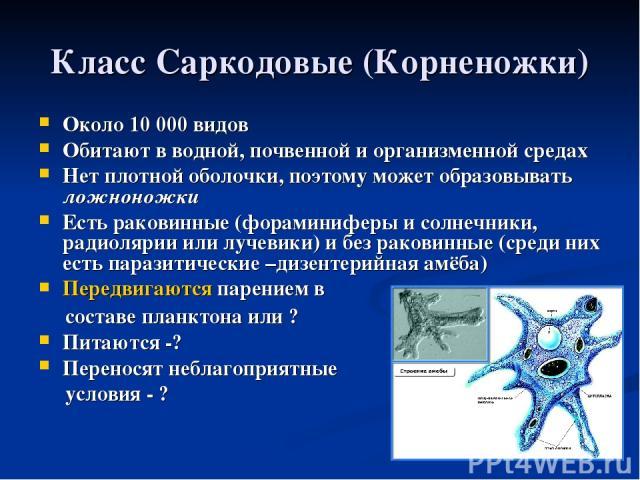 Класс Саркодовые (Корненожки) Около 10 000 видов Обитают в водной, почвенной и организменной средах Нет плотной оболочки, поэтому может образовывать ложноножки Есть раковинные (фораминиферы и солнечники, радиолярии или лучевики) и без раковинные (ср…