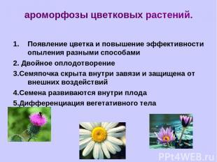 ароморфозы цветковых растений. Появление цветка и повышение эффективности опылен