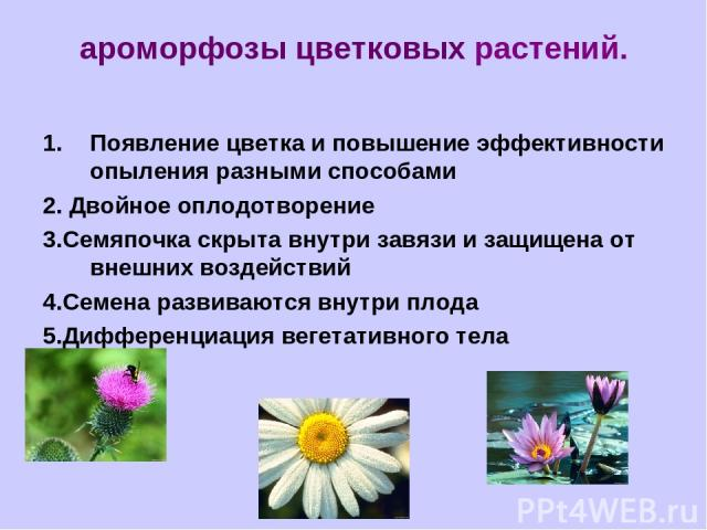 ароморфозы цветковых растений. Появление цветка и повышение эффективности опыления разными способами 2. Двойное оплодотворение 3.Семяпочка скрыта внутри завязи и защищена от внешних воздействий 4.Семена развиваются внутри плода 5.Дифференциация веге…