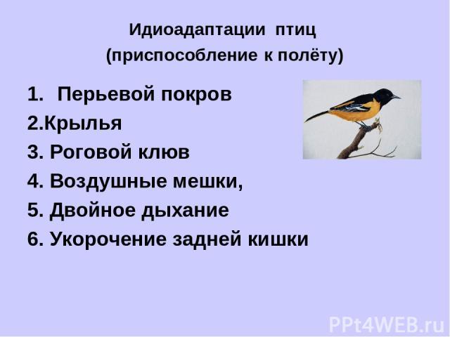 Идиоадаптации птиц (приспособление к полёту) Перьевой покров 2.Крылья 3. Роговой клюв 4. Воздушные мешки, 5. Двойное дыхание 6. Укорочение задней кишки