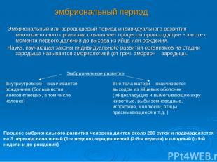 Эмбриональный или зародышевый период индивидуального развития многоклеточного ор