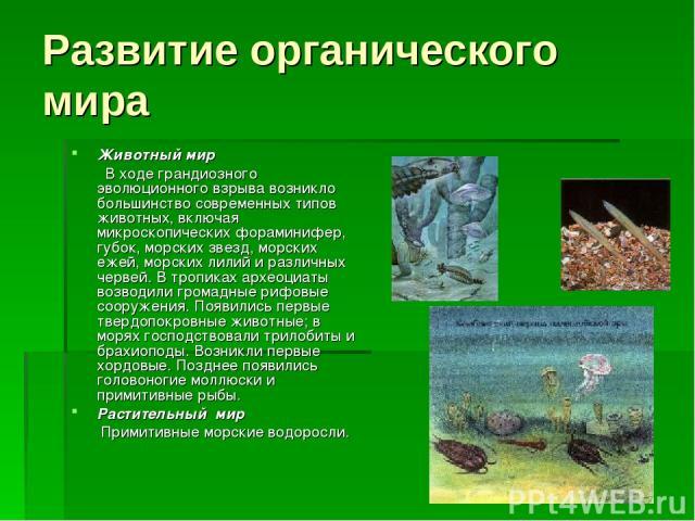 Развитие органического мира Животный мир В ходе грандиозного эволюционного взрыва возникло большинство современных типов животных, включая микроскопических фораминифер, губок, морских звезд, морских ежей, морских лилий и различных червей. В тропиках…