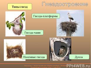 Типы гнезд Наземные гнезда Гнезда-чаши Гнезда-платформы Дупла «Биология» | Издат
