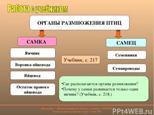 ОРГАНЫ РАЗМНОЖЕНИЯ ПТИЦ САМКА САМЕЦ Яичник Семенники Учебник, с. 217 Воронка яйц