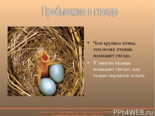 Чем крупнее птица, тем позже птенцы покидают гнездо. У многих птенцы покидают гн