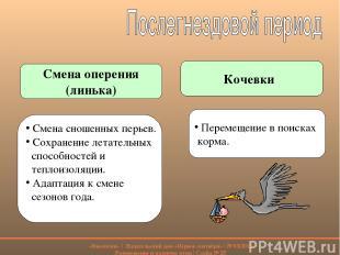 Смена оперения (линька) Кочевки Смена сношенных перьев. Сохранение летательных с