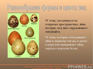 У птиц, гнездящихся на открытых пространствах, яйца пестрые, под цвет окружающег