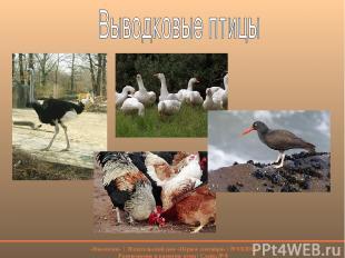 «Биология» | Издательский дом «Первое сентября» | № 03/2012 Размножение и развит