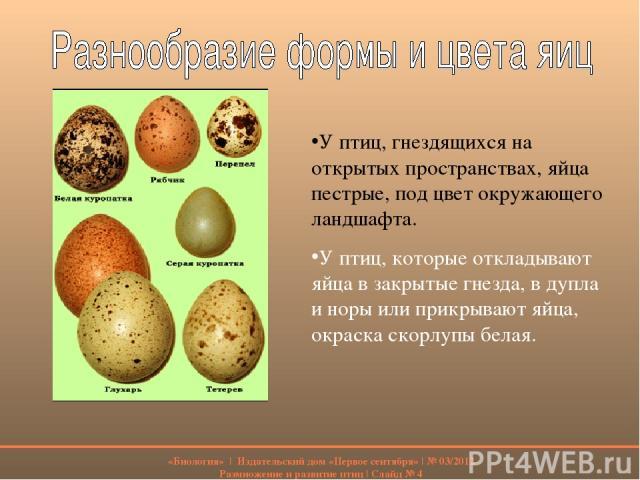 У птиц, гнездящихся на открытых пространствах, яйца пестрые, под цвет окружающего ландшафта. У птиц, которые откладывают яйца в закрытые гнезда, в дупла и норы или прикрывают яйца, окраска скорлупы белая. «Биология» | Издательский дом «Первое сентяб…