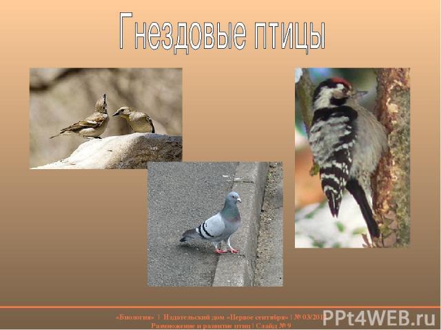 «Биология» | Издательский дом «Первое сентября» | № 03/2012 Размножение и развитие птиц | Слайд № 9